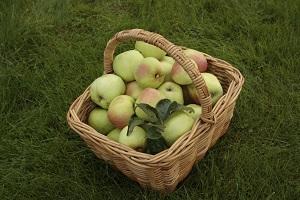 Smagfulde filippa æbler